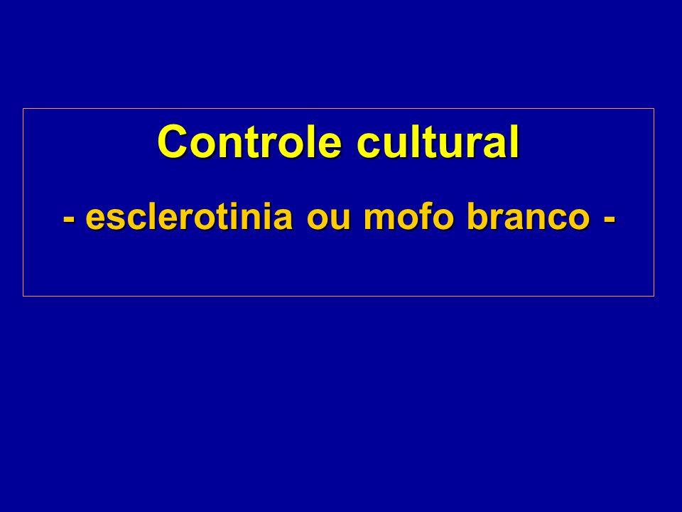 Controle cultural - esclerotinia ou mofo branco - Controle cultural - esclerotinia ou mofo branco -