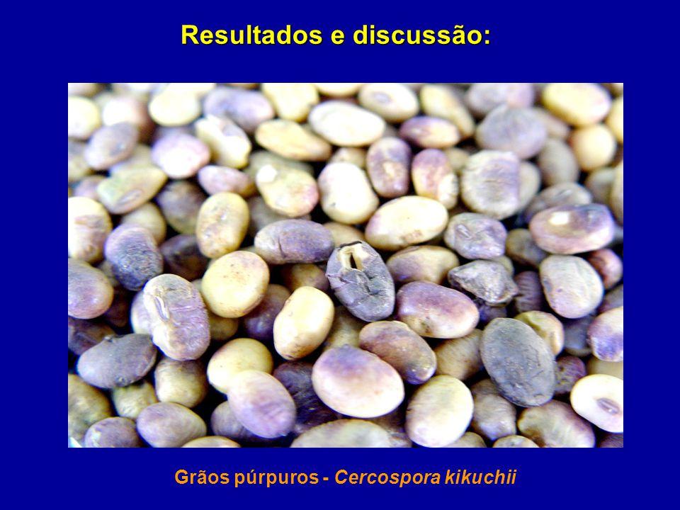 Grãos púrpuros - Cercospora kikuchii Resultados e discussão: