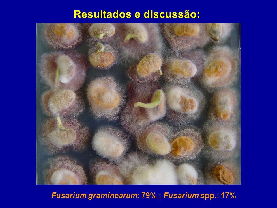 Fusarium graminearum: 79% ; Fusarium spp.: 17% Resultados e discussão: