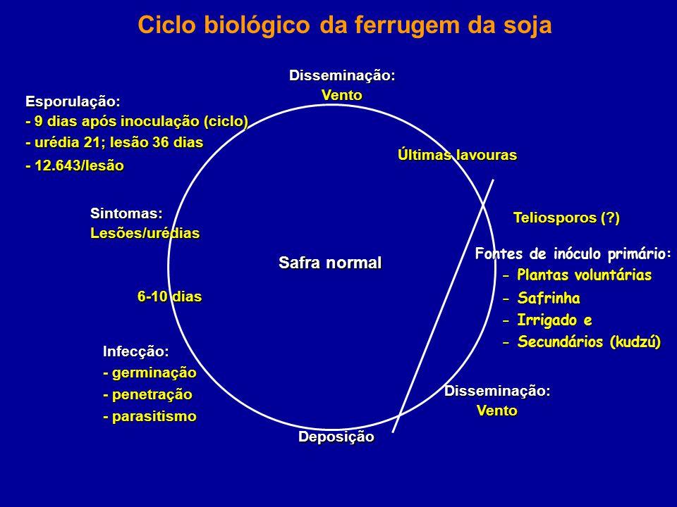 Ciclo biológico da ferrugem da soja Teliosporos (?) Últimas lavouras Fontes de inóculo primário: - Plantas voluntárias - Plantas voluntárias - Safrinh