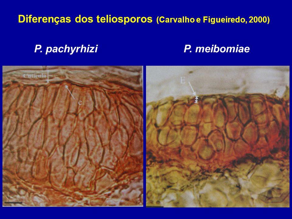 P. pachyrhiziP. meibomiae Diferenças dos teliosporos (Carvalho e Figueiredo, 2000)