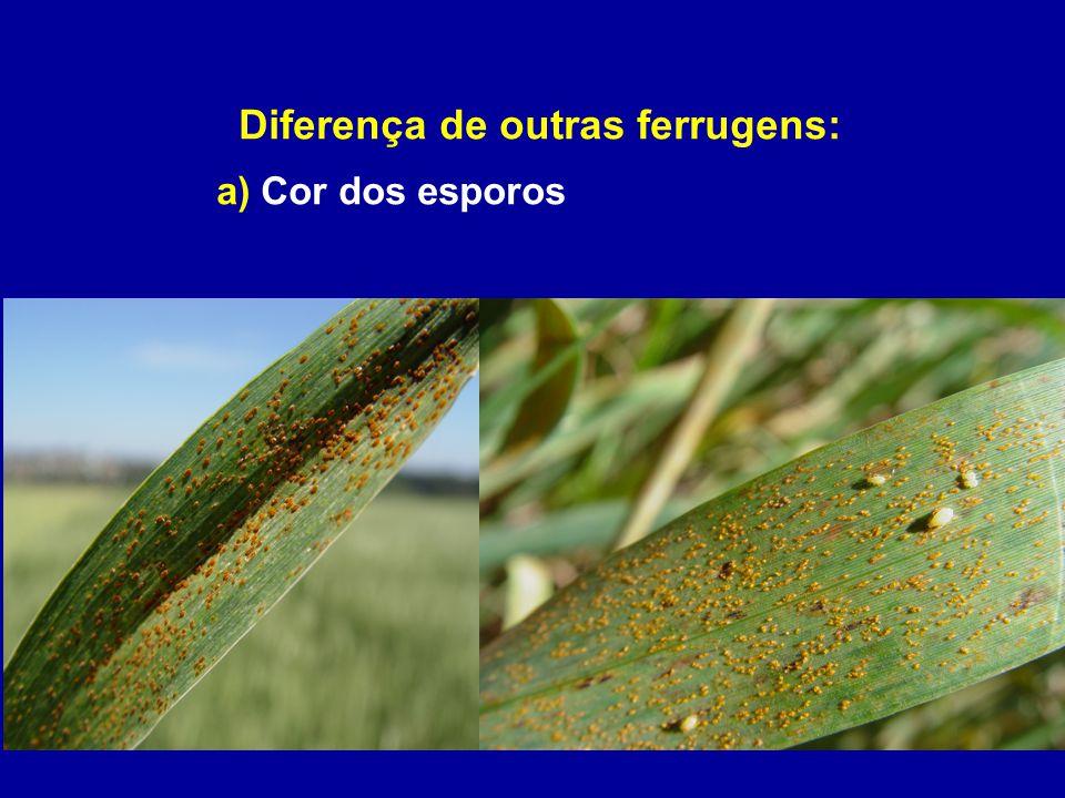 Diferença de outras ferrugens: a) Cor dos esporos