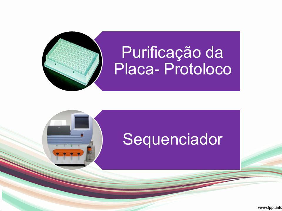 5) Sequenciamento MEGABACE Sequencing e não Genotyping; RINSE TIPS limpeza dos capilares FLUSH AND DRY 1X semana MATRIX FILL AND PRERUN: matriz INJECT SAMPLES AND RUN (lado da placa correto) Placa com o LPA/ 180 minutos Pós: Store Cappilars (25ºC)