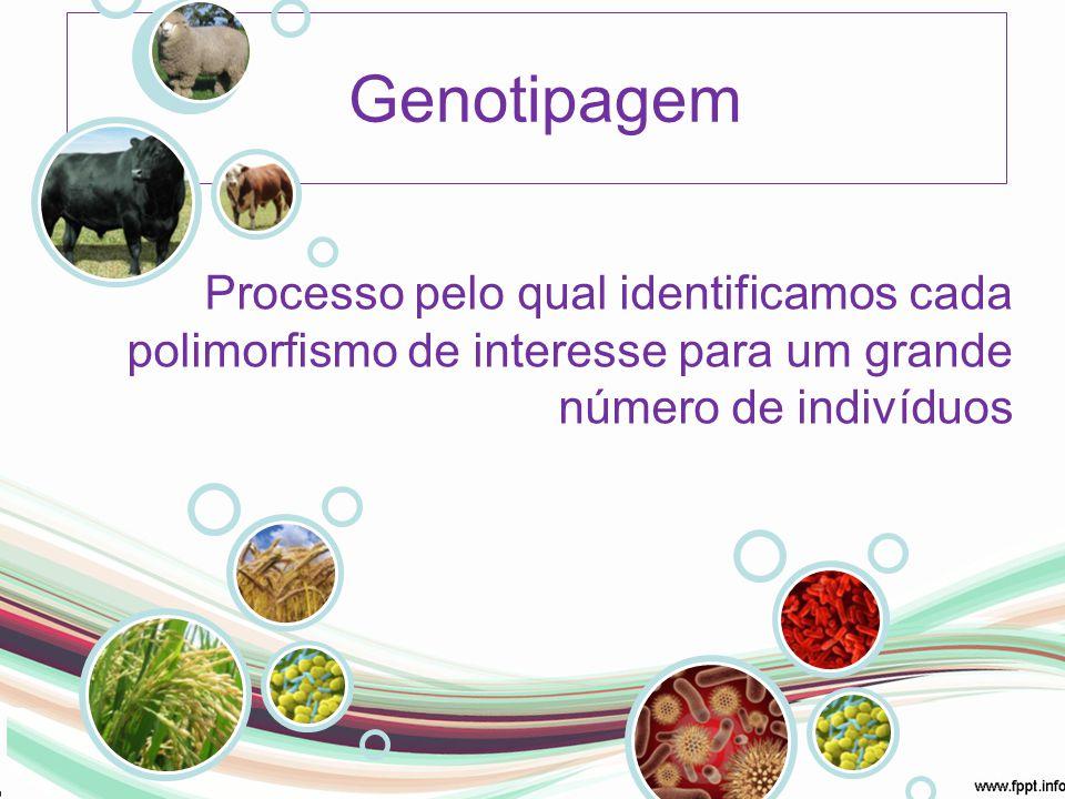 Genotipagem Processo pelo qual identificamos cada polimorfismo de interesse para um grande número de indivíduos