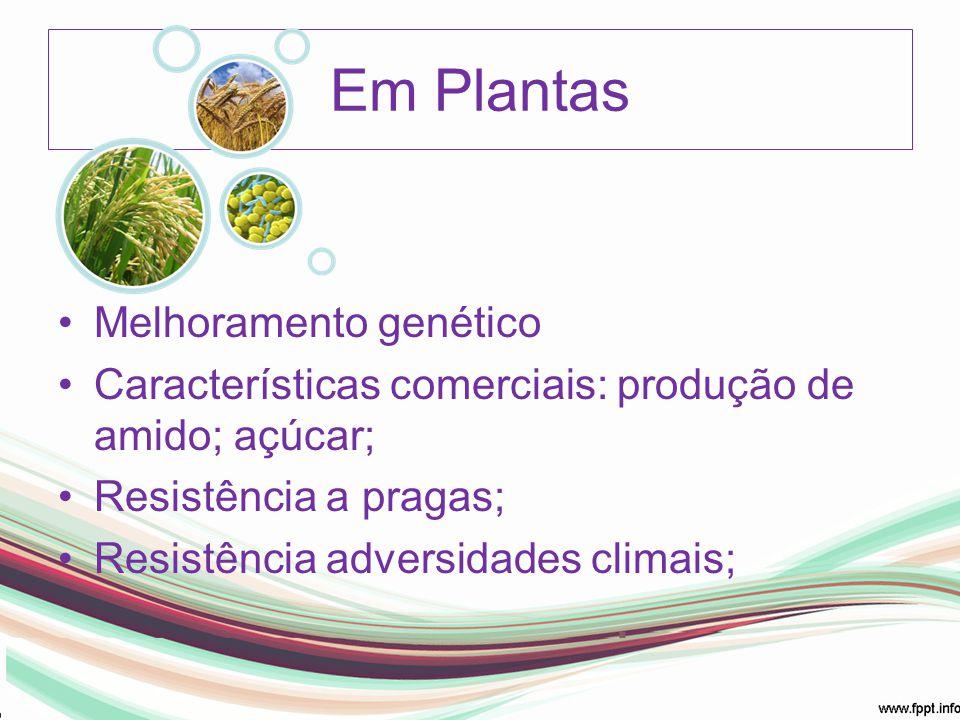 Em Plantas Melhoramento genético Características comerciais: produção de amido; açúcar; Resistência a pragas; Resistência adversidades climais;