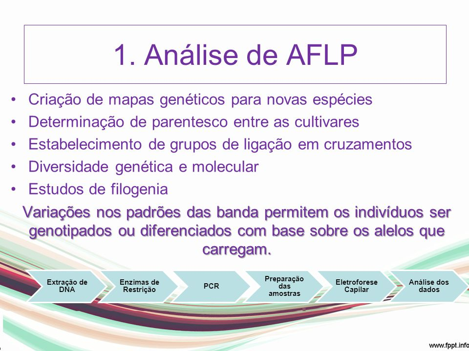 1. Análise de AFLP Criação de mapas genéticos para novas espécies Determinação de parentesco entre as cultivares Estabelecimento de grupos de ligação