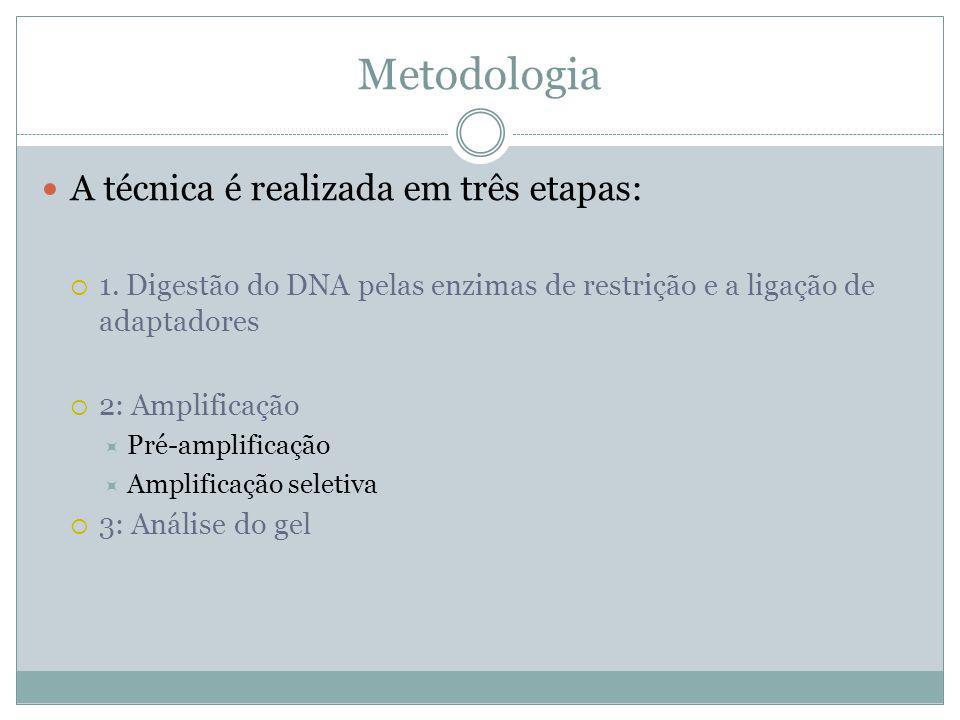 Metodologia A técnica é realizada em três etapas: 1. Digestão do DNA pelas enzimas de restrição e a ligação de adaptadores 2: Amplificação Pré-amplifi