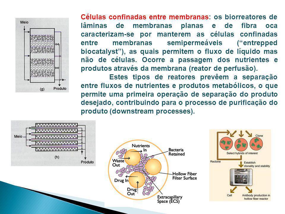Células confinadas entre membranas: os biorreatores de lâminas de membranas planas e de fibra oca caracterizam-se por manterem as células confinadas e
