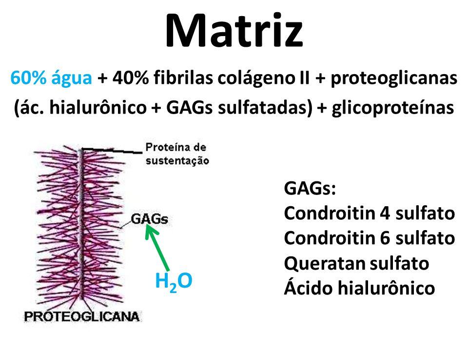 Matriz 60% água + 40% fibrilas colágeno II + proteoglicanas (ác.
