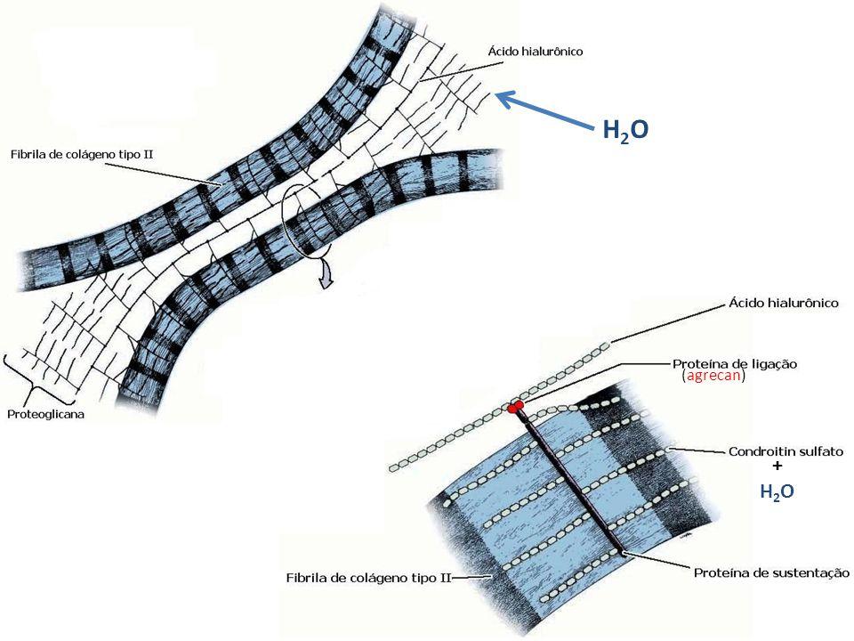 H2OH2O (agrecan) +H2O+H2O