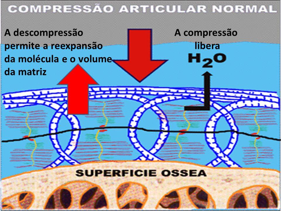 A compressão libera A descompressão permite a reexpansão da molécula e o volume da matriz