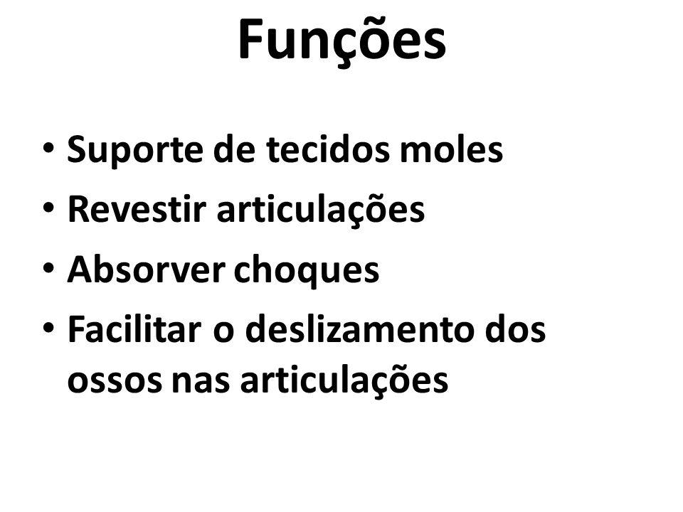 Funções Suporte de tecidos moles Revestir articulações Absorver choques Facilitar o deslizamento dos ossos nas articulações