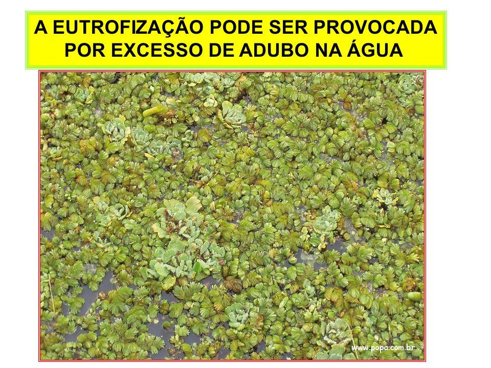 A EUTROFIZAÇÃO PODE SER PROVOCADA POR EXCESSO DE ADUBO NA ÁGUA