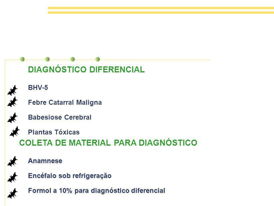 BHV-5 Febre Catarral Maligna Babesiose Cerebral Plantas Tóxicas DIAGNÓSTICO DIFERENCIAL COLETA DE MATERIAL PARA DIAGNÓSTICO Anamnese Encéfalo sob refrigeração Formol a 10% para diagnóstico diferencial