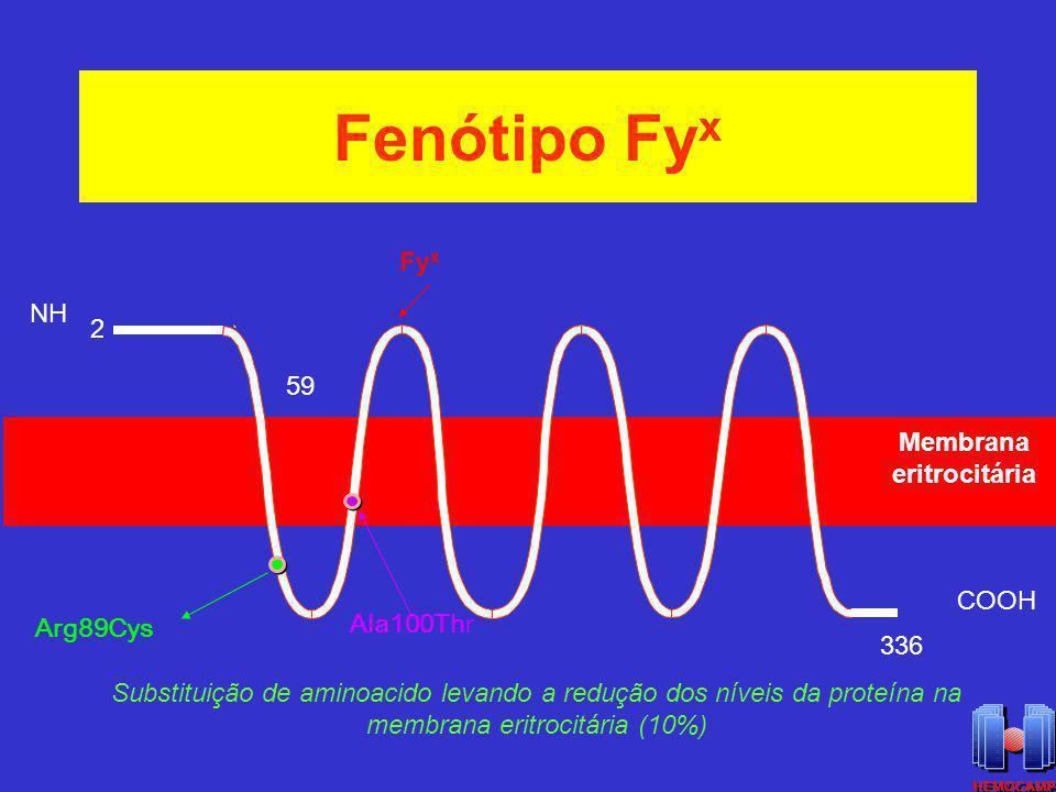 Fenótipo Fy x Fy x Membrana eritrocitária NH 2 COOH 59 336 Arg89Cys Ala100Thr Substituição de aminoacido levando a redução dos níveis da proteína na m
