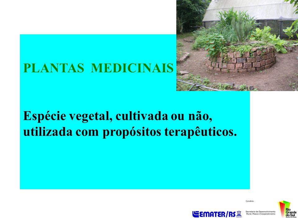 PLANTAS MEDICINAIS - Uso familiar histórico – contexto cultural - Tema estratégico para trabalhar a Promoção da Saúde e a Prevenção de Doenças.