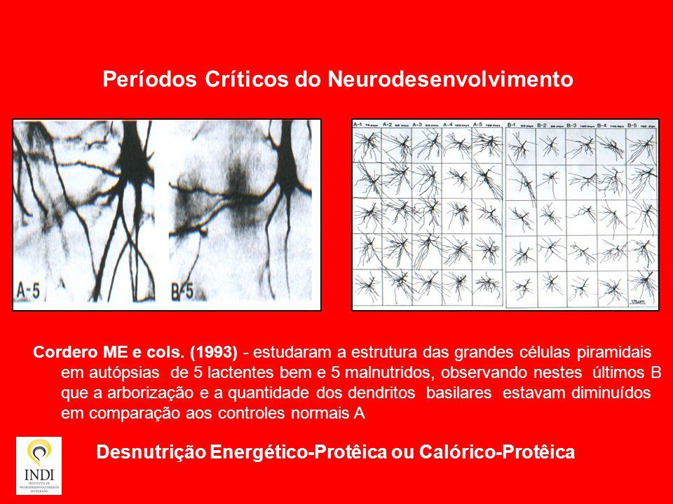Desnutrição Energético-Protêica ou Calórico-Protêica Cordero ME e cols. (1993) - estudaram a estrutura das grandes células piramidais em autópsias de