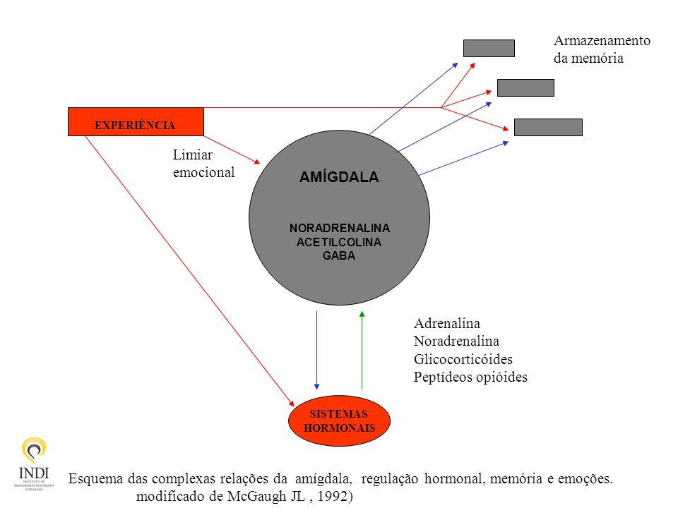 SISTEMAS HORMONAIS EXPERIÊNCIA AMÍGDALA NORADRENALINA ACETILCOLINA GABA Adrenalina Noradrenalina Glicocorticóides Peptídeos opióides Limiar emocional