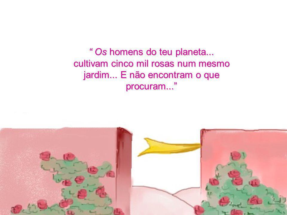 Os homens do teu planeta...cultivam cinco mil rosas num mesmo jardim...