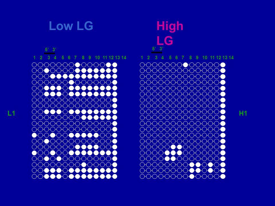5 3 Low LGHigh LG L1H1 1 2 3 4 5 6 7 8 9 10 11 12 13 14 5 3 1 2 3 4 5 6 7 8 9 10 11 12 13 14