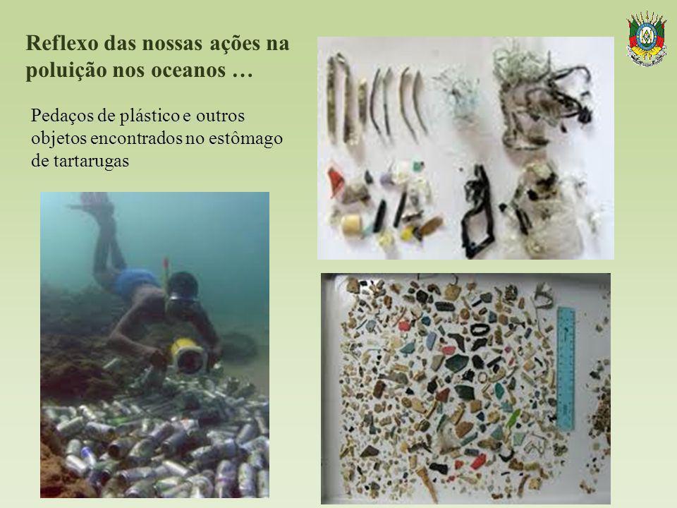 Reflexo das nossas ações na poluição nos oceanos …. Pedaços de plástico e outros objetos encontrados no estômago de tartarugas
