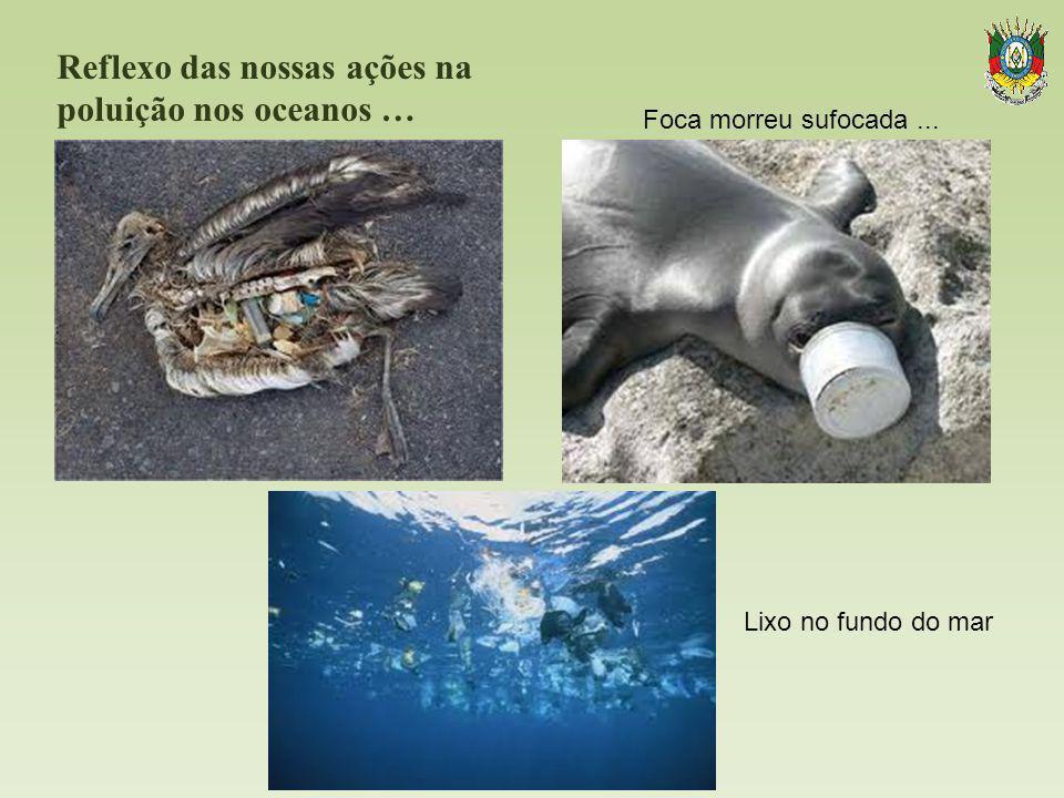 Reflexo das nossas ações na poluição nos oceanos …. Foca morreu sufocada... Lixo no fundo do mar