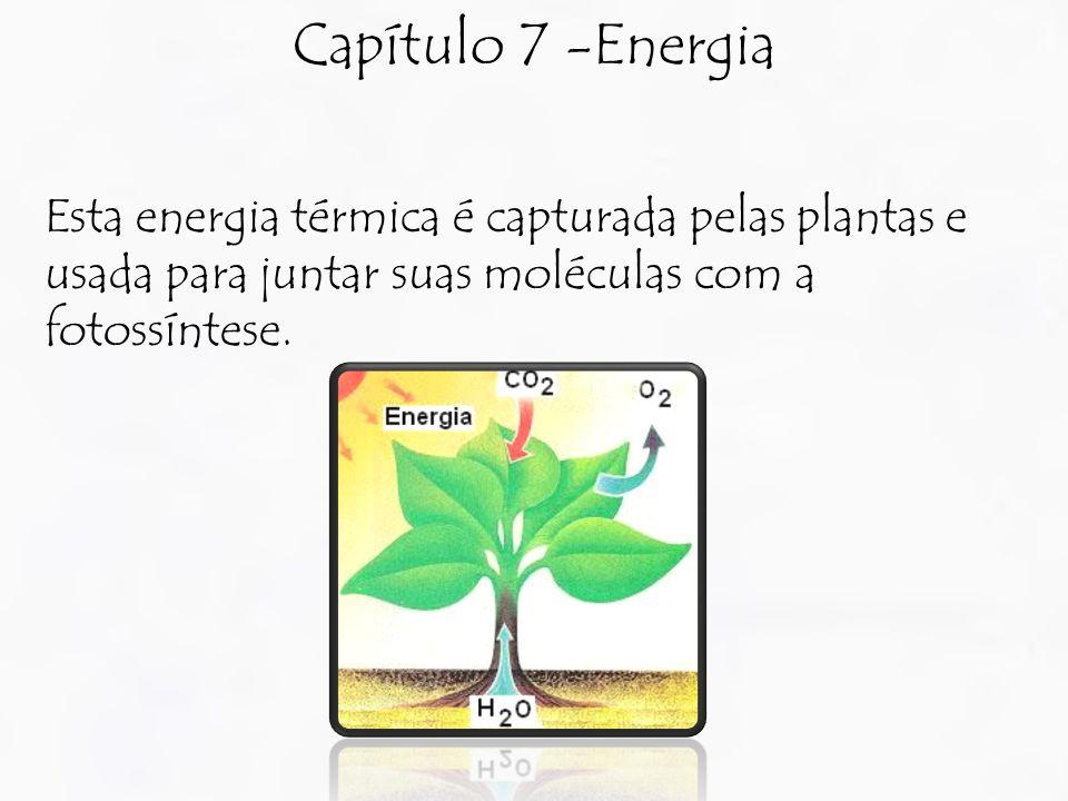 Capítulo 7 -Energia Esta energia térmica é capturada pelas plantas e usada para juntar suas moléculas com a fotossíntese.