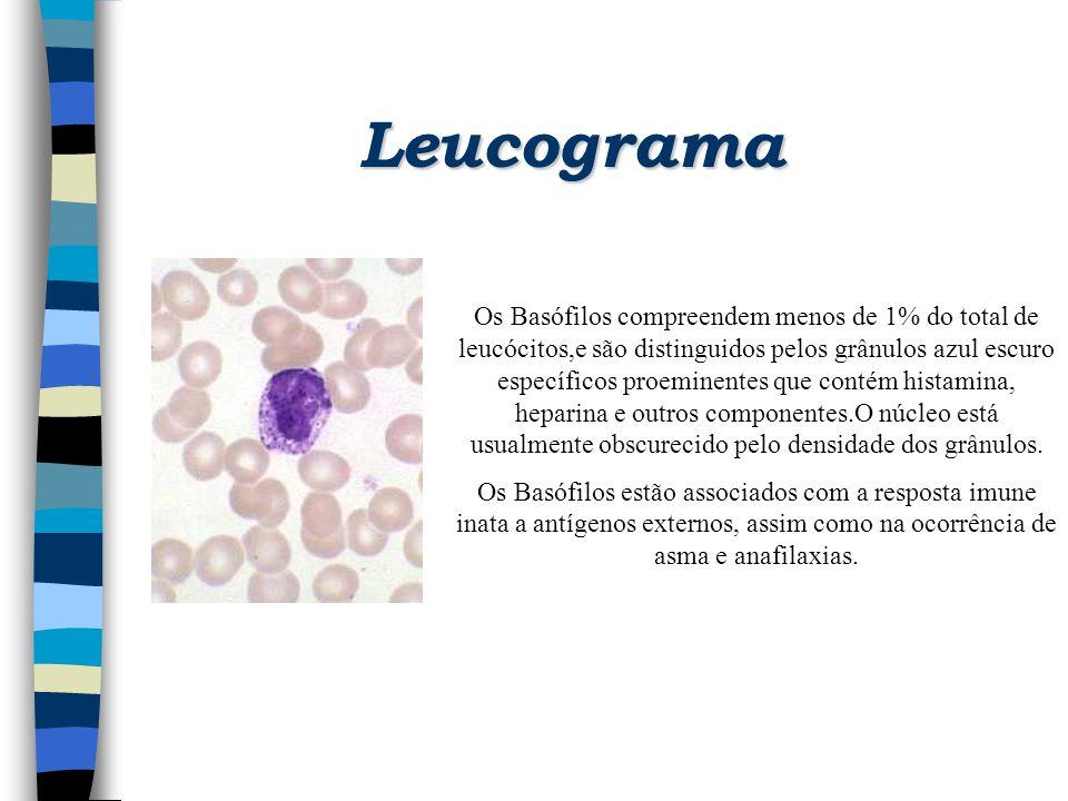 Leucograma Os Basófilos compreendem menos de 1% do total de leucócitos,e são distinguidos pelos grânulos azul escuro específicos proeminentes que cont