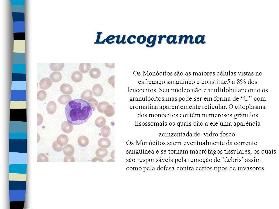 Leucograma Os Monócitos são as maiores células vistas no esfregaço sangüíneo e constitue5 a 8% dos leucócitos. Seu núcleo não é multilobular como os g