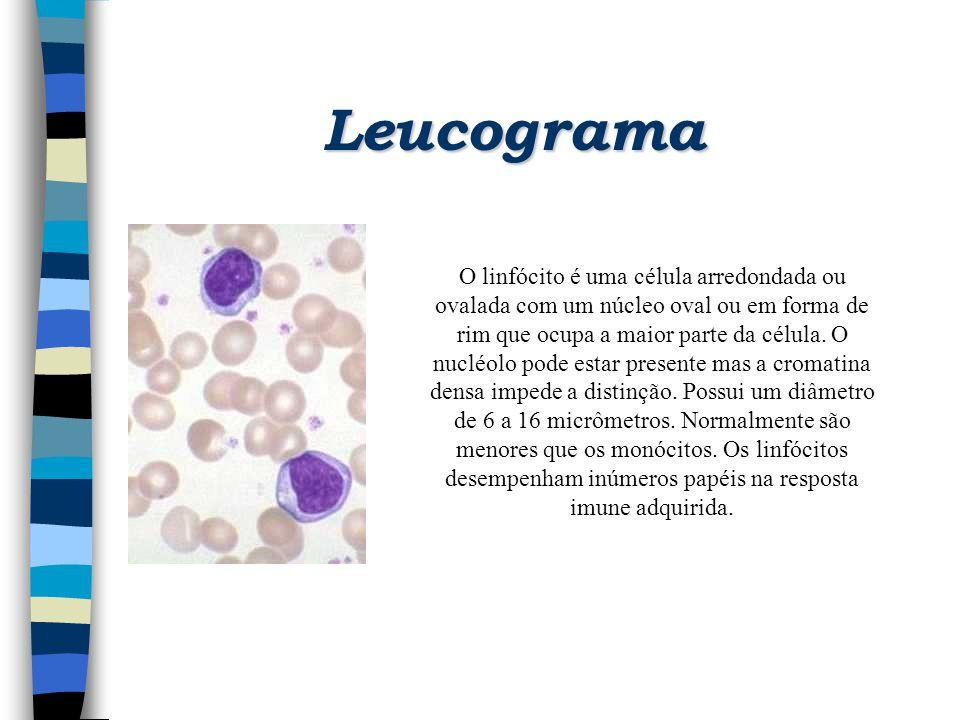 Leucograma O linfócito é uma célula arredondada ou ovalada com um núcleo oval ou em forma de rim que ocupa a maior parte da célula. O nucléolo pode es