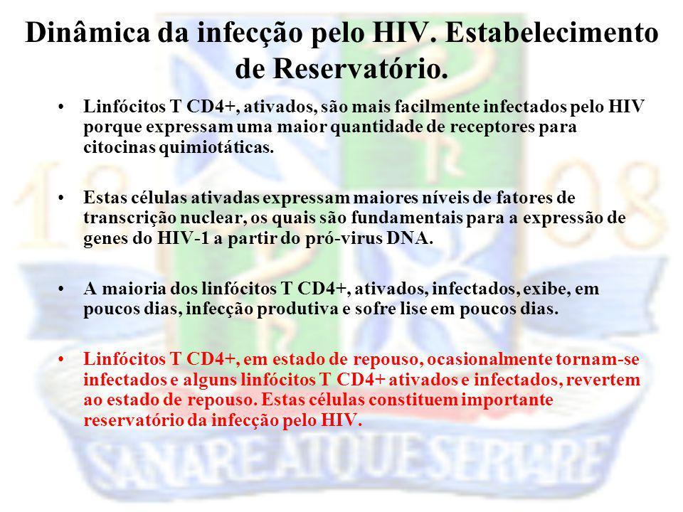 Linfócitos T CD4+, ativados, são mais facilmente infectados pelo HIV porque expressam uma maior quantidade de receptores para citocinas quimiotáticas.