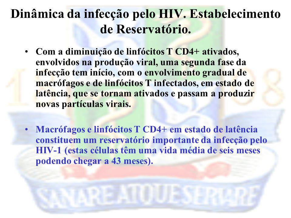 Com a diminuição de linfócitos T CD4+ ativados, envolvidos na produção viral, uma segunda fase da infecção tem início, com o envolvimento gradual de m