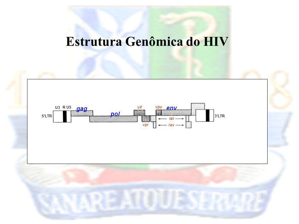 5LTR3LTR U3 RU5 gag pol vif tat env rev vpr vpu Estrutura Genômica do HIV