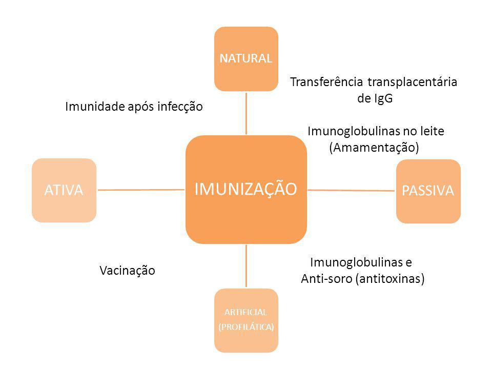 IMUNIZAÇÃO NATURAL PASSIVA ARTIFICIAL (PROFILÁTICA) ATIVA Imunidade após infecção Transferência transplacentária de IgG Imunoglobulinas no leite (Amamentação) Imunoglobulinas e Anti-soro (antitoxinas) Vacinação