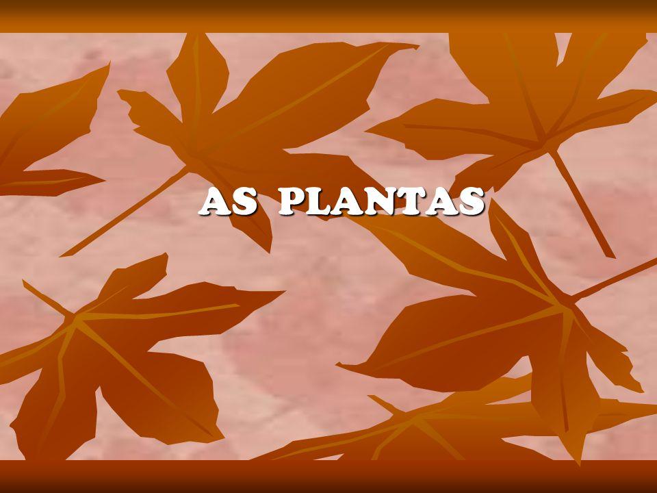Introdução As plantas são muito importantes para a nossa vida.