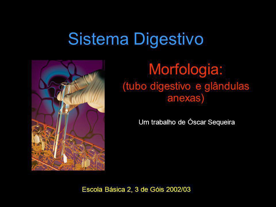 Sistema Digestivo Morfologia: (tubo digestivo e glândulas anexas) Escola Básica 2, 3 de Góis 2002/03 Um trabalho de Óscar Sequeira