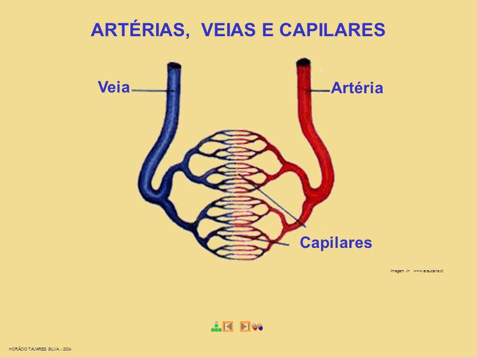HORÁCIO TAVARES SILVA - 2004 Imagem in www.araucaria.cl ARTÉRIAS, VEIAS E CAPILARES Veia Artéria Capilares