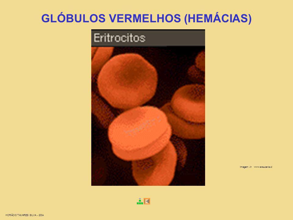 HORÁCIO TAVARES SILVA - 2004 Imagem in www.araucaria.cl GLÓBULOS VERMELHOS (HEMÁCIAS)