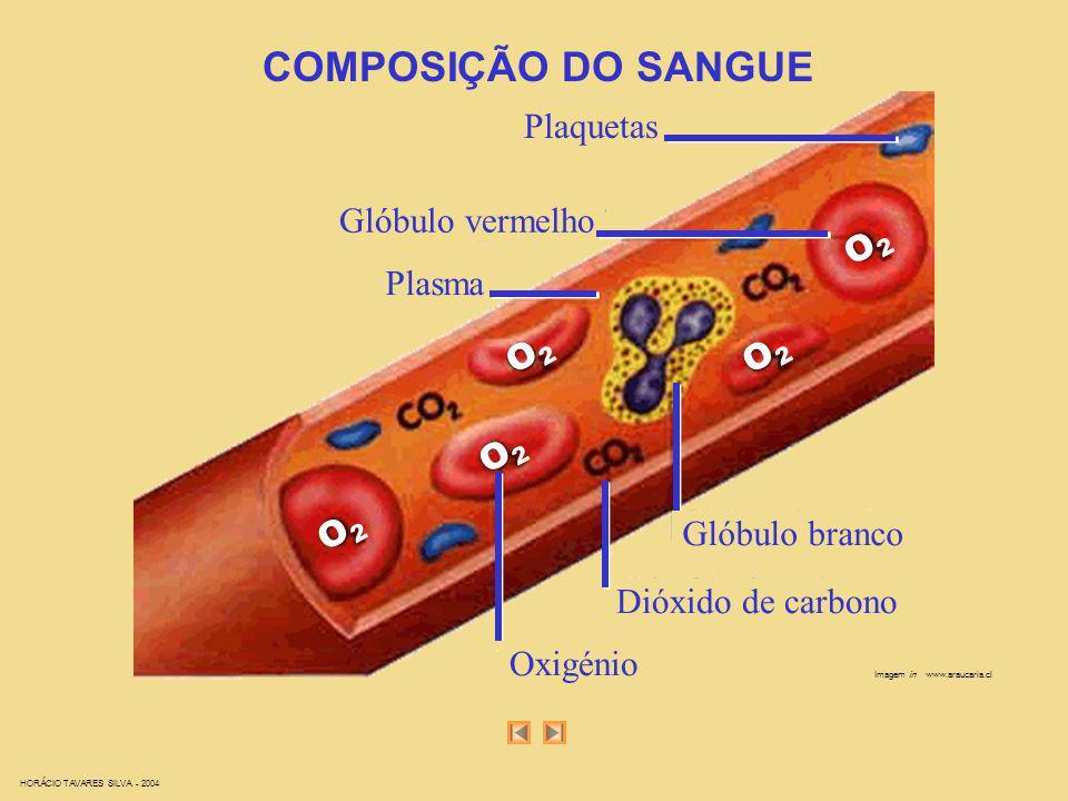 HORÁCIO TAVARES SILVA - 2004 Imagem in www.araucaria.cl COMPOSIÇÃO DO SANGUE Plaquetas Glóbulo vermelho Plasma Glóbulo branco Dióxido de carbono Oxigé