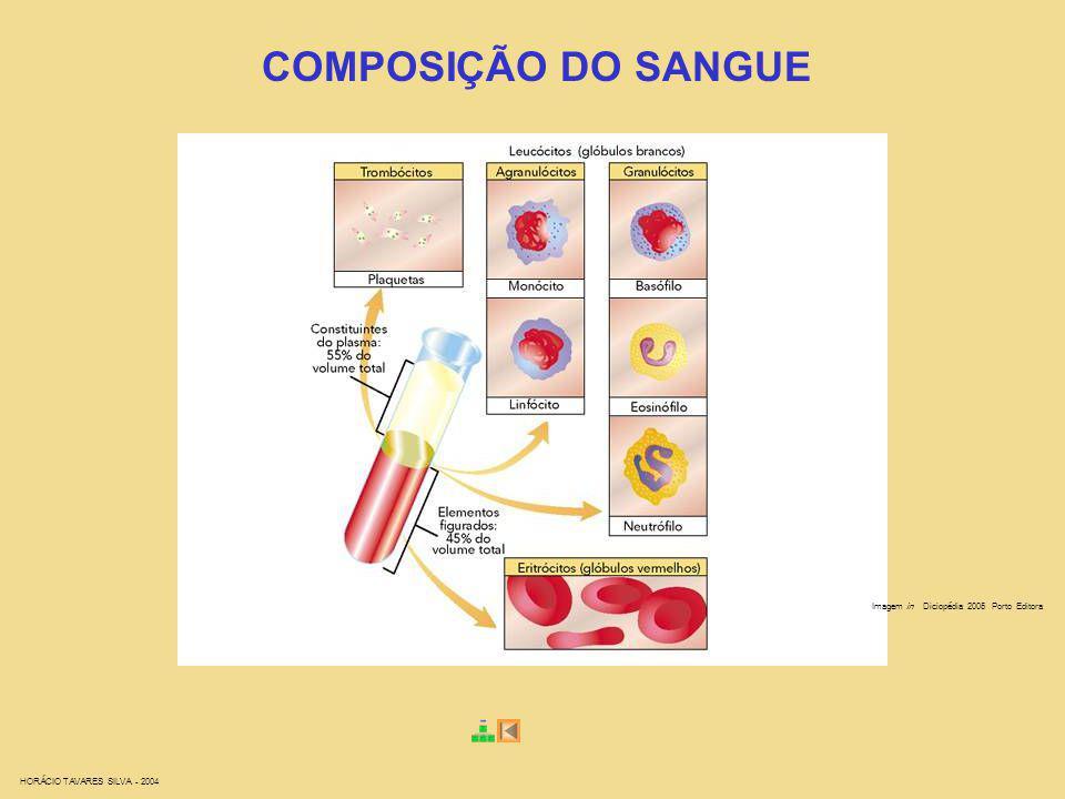 HORÁCIO TAVARES SILVA - 2004 COMPOSIÇÃO DO SANGUE Imagem in Diciopédia 2005 Porto Editora