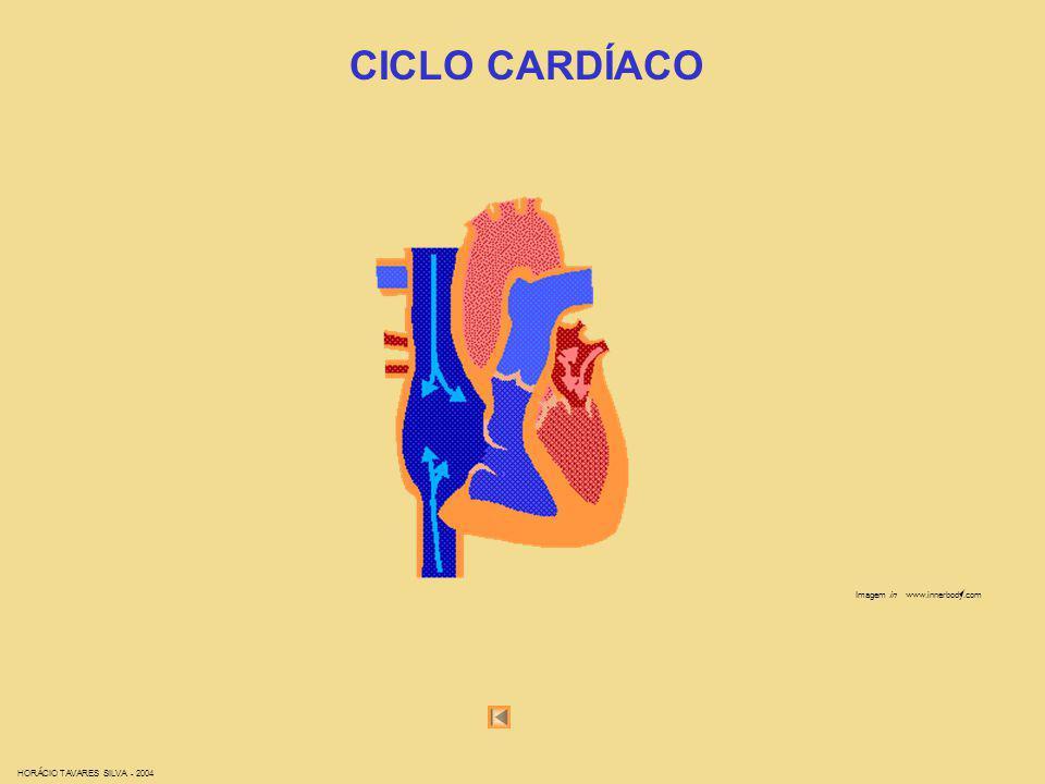 CICLO CARDÍACO Imagem in www.innerbody.com HORÁCIO TAVARES SILVA - 2004