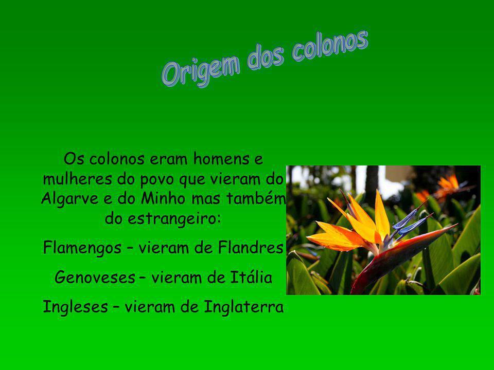 Os colonos eram homens e mulheres do povo que vieram do Algarve e do Minho mas também do estrangeiro: Flamengos – vieram de Flandres Genoveses – viera