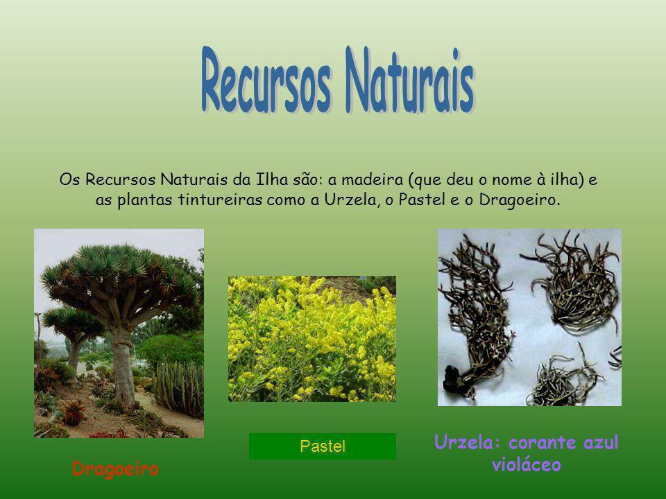 Os Recursos Naturais da Ilha são: a madeira (que deu o nome à ilha) e as plantas tintureiras como a Urzela, o Pastel e o Dragoeiro. Dragoeiro Urzela: