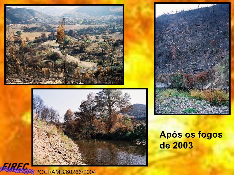 Após os fogos de 2003