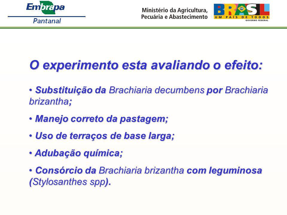 O experimento esta avaliando o efeito: Substituição da Brachiaria decumbens por Brachiaria brizantha; Substituição da Brachiaria decumbens por Brachia