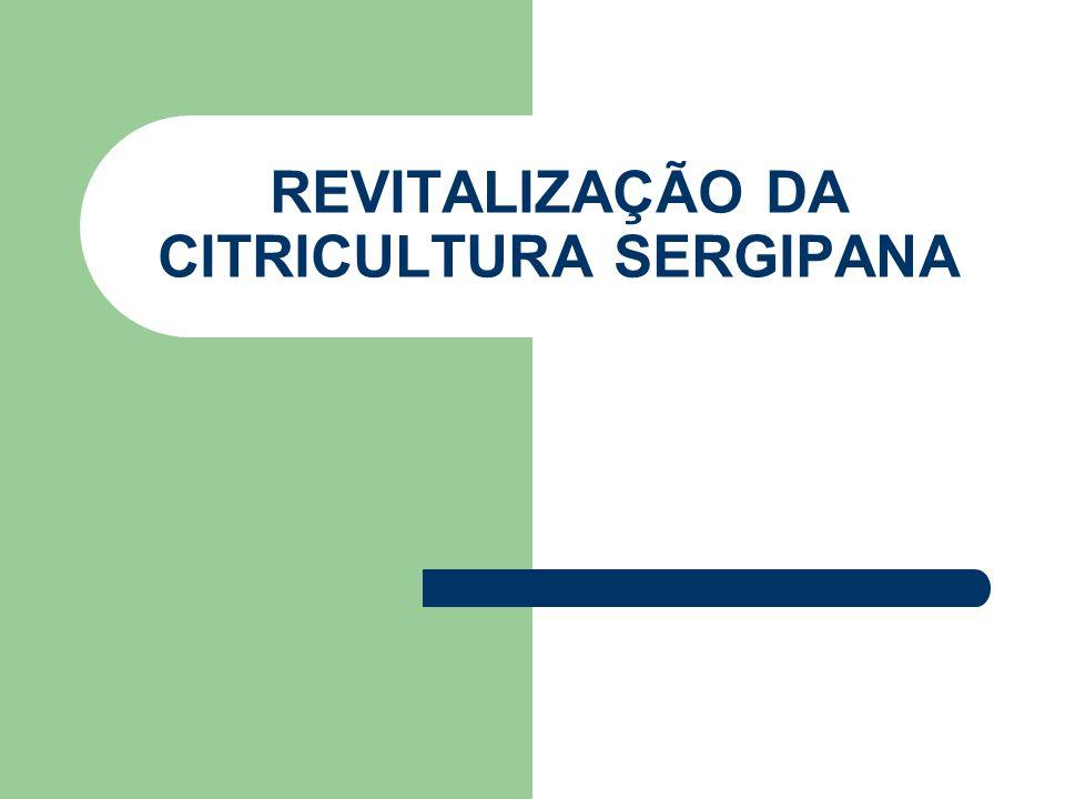 ONDE E QUEM PRODUZ O programa de revitalização vinha sendo desenvolvido desde 2003, na Região Centro- Sul de Sergipe.