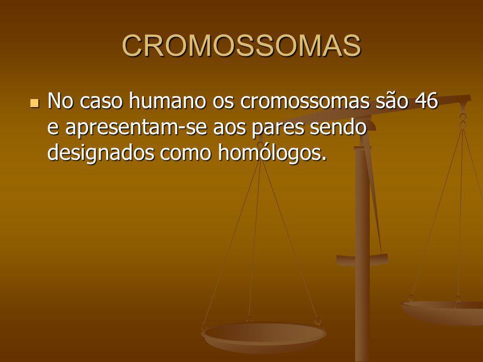 CROMOSSOMAS No caso humano os cromossomas são 46 e apresentam-se aos pares sendo designados como homólogos. No caso humano os cromossomas são 46 e apr