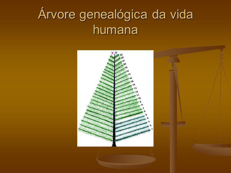 Árvore genealógica da vida humana