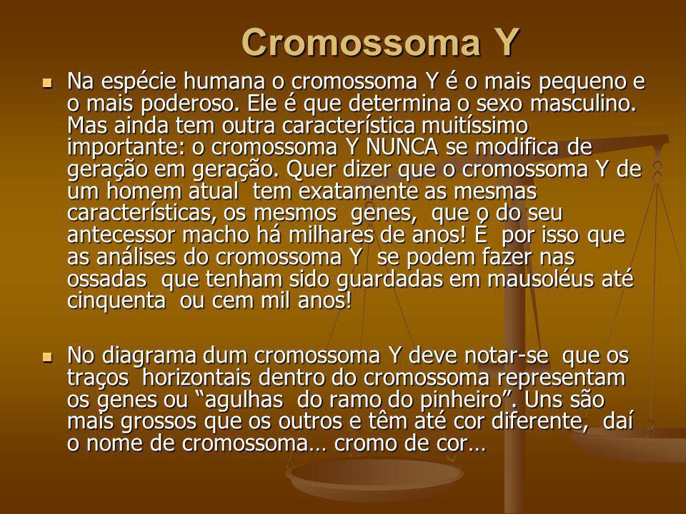 Cromossoma Y Cromossoma Y Na espécie humana o cromossoma Y é o mais pequeno e o mais poderoso. Ele é que determina o sexo masculino. Mas ainda tem out