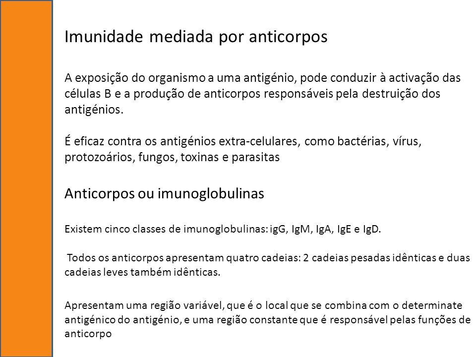 Imunidade mediada por anticorpos A exposição do organismo a uma antigénio, pode conduzir à activação das células B e a produção de anticorpos responsá